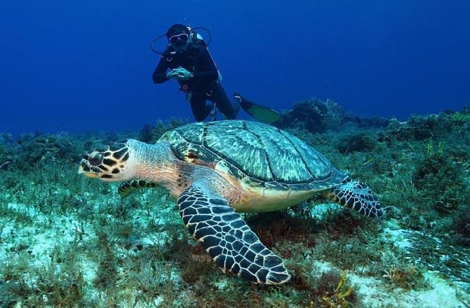 Scuba Diving in Mozambique
